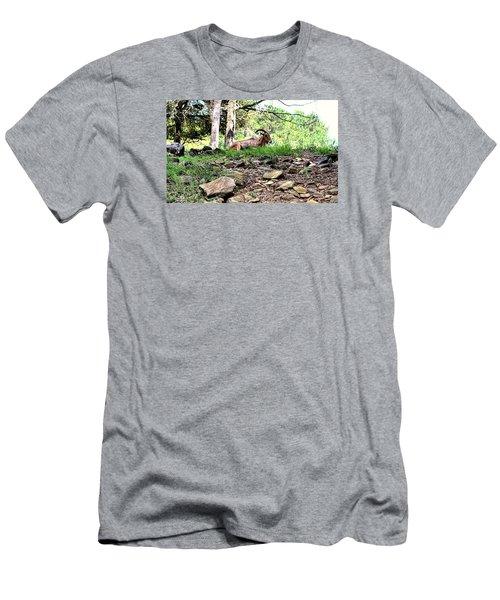 Georgia Mountain Goat At Rest Men's T-Shirt (Slim Fit) by James Potts