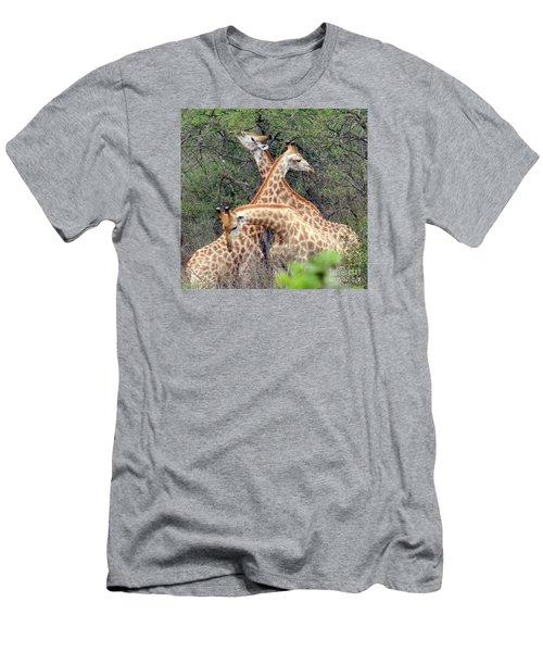 Giraffe Flirting Men's T-Shirt (Slim Fit) by John Potts