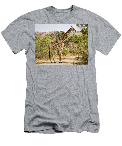 Giraffe Grazing Men's T-Shirt (Athletic Fit)