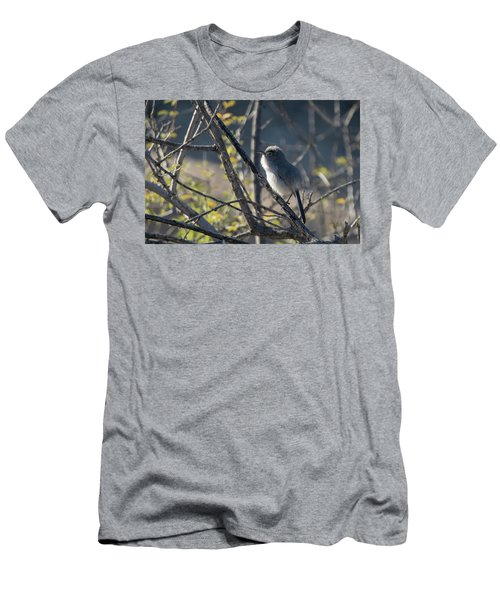 Gnatcatcher Men's T-Shirt (Athletic Fit)