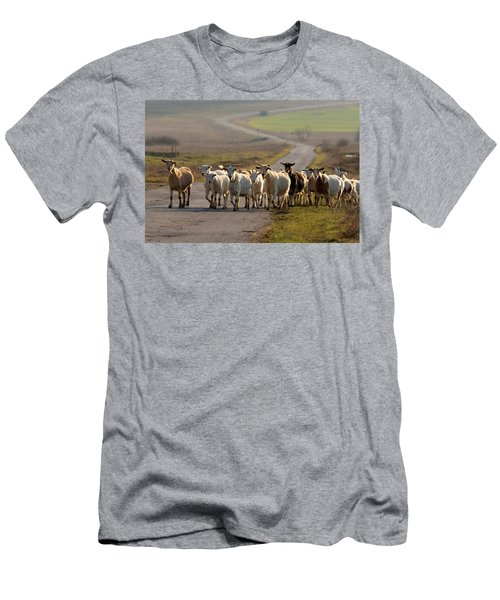 Goats Walking Home Men's T-Shirt (Athletic Fit)