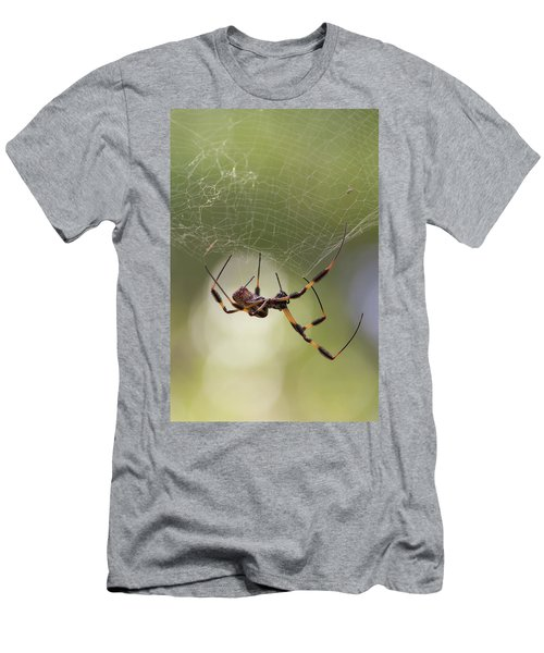 Golden-silk Spider Men's T-Shirt (Athletic Fit)