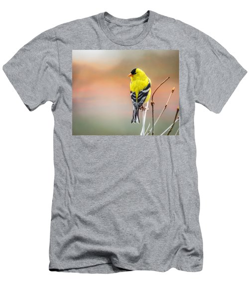 Goldfinch At Sunrise Men's T-Shirt (Athletic Fit)