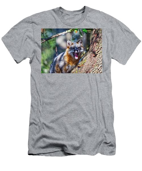Gray Fox Awakens In The Tree Men's T-Shirt (Athletic Fit)