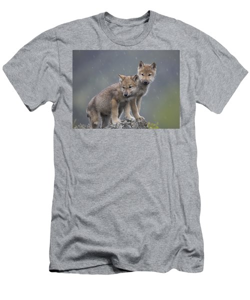 Gray Wolf Canis Lupus Pups In Light Men's T-Shirt (Athletic Fit)