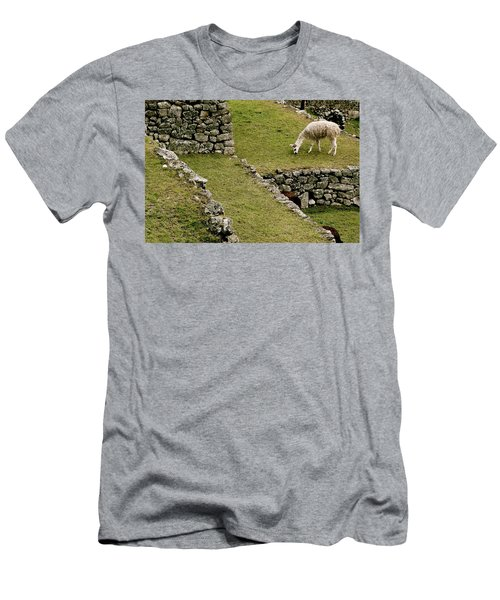 Grazing In Machu Picchu Men's T-Shirt (Athletic Fit)