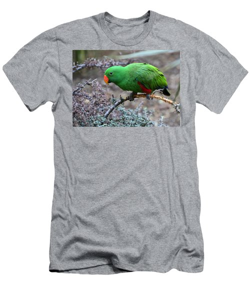Green Male Eclectus Parrot Men's T-Shirt (Athletic Fit)