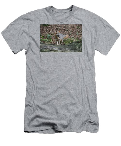 Grey Fox Men's T-Shirt (Athletic Fit)