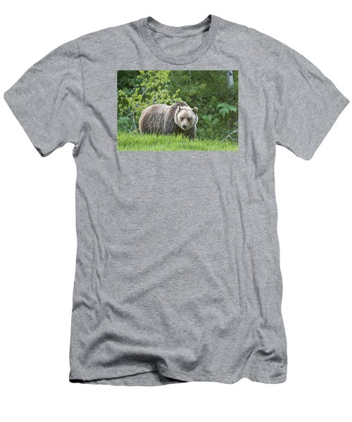 Grizzly Bear Men's T-Shirt (Slim Fit) by Gary Lengyel