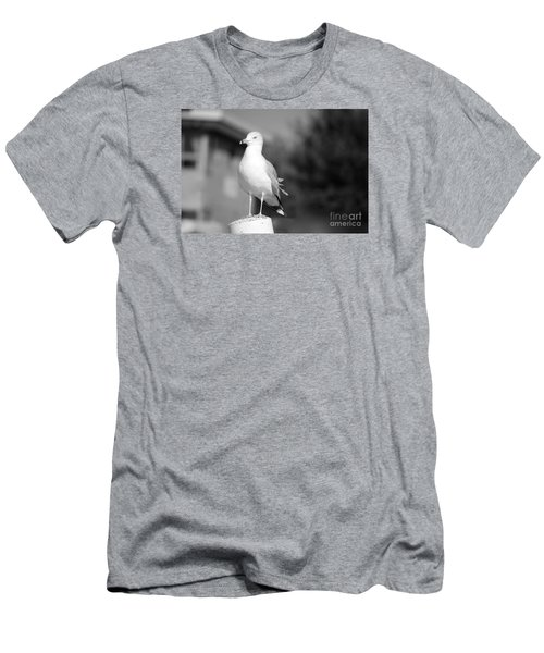 Gull In Black And White Men's T-Shirt (Athletic Fit)