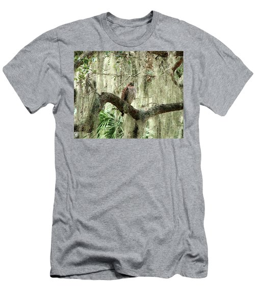 Hawk In Live Oak Hammock Men's T-Shirt (Athletic Fit)