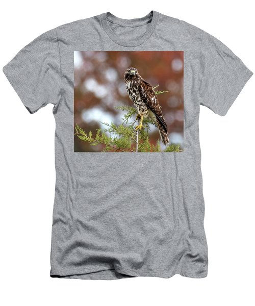 Red Shoulder Hawk Looking At Me Men's T-Shirt (Athletic Fit)