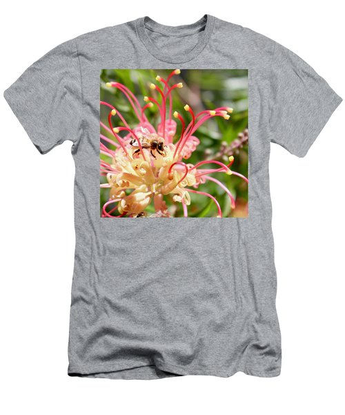 Honey Bee On Grevillea  Men's T-Shirt (Athletic Fit)
