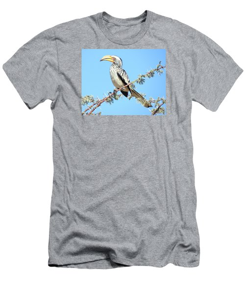 Hornbill In Thorn Tree Men's T-Shirt (Athletic Fit)