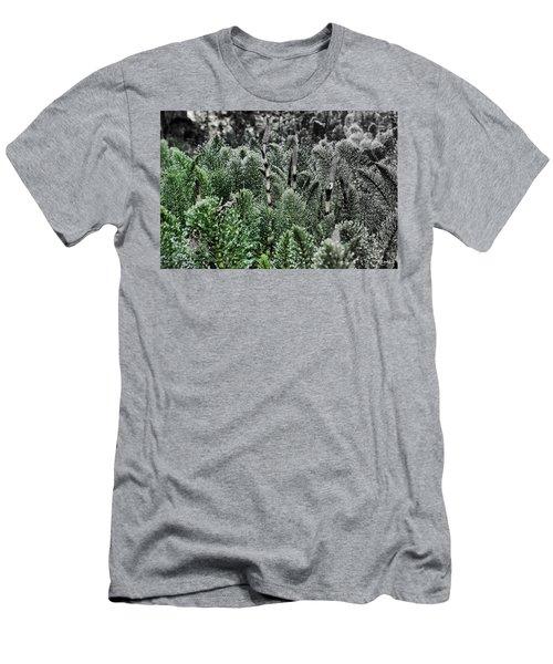 Horsetail Dewpoint Men's T-Shirt (Athletic Fit)