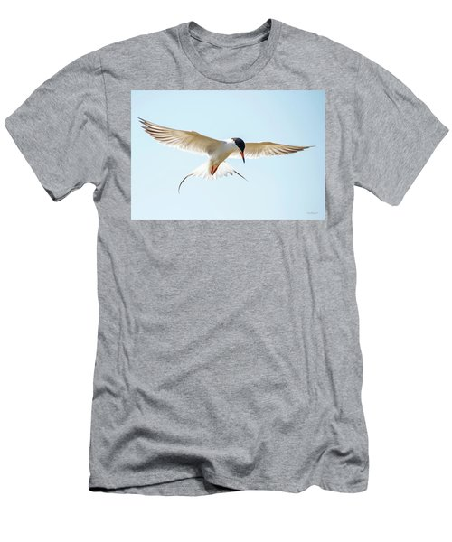 Hovering Tern Men's T-Shirt (Athletic Fit)