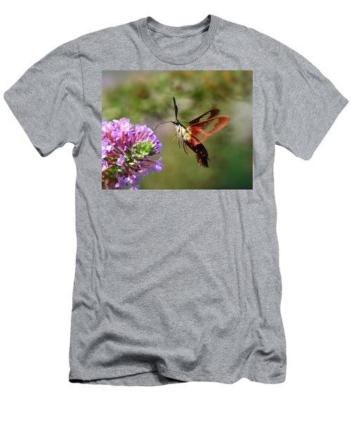 Hummingbird Clearwing Moth Men's T-Shirt (Athletic Fit)