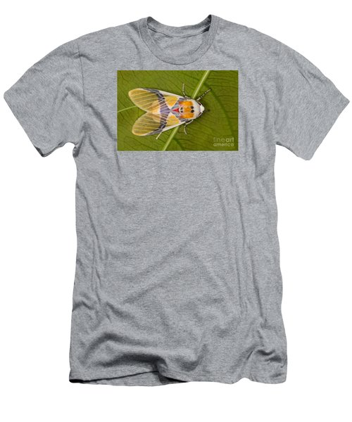 Idalus Carinosa Moth Men's T-Shirt (Slim Fit) by Gabor Pozsgai