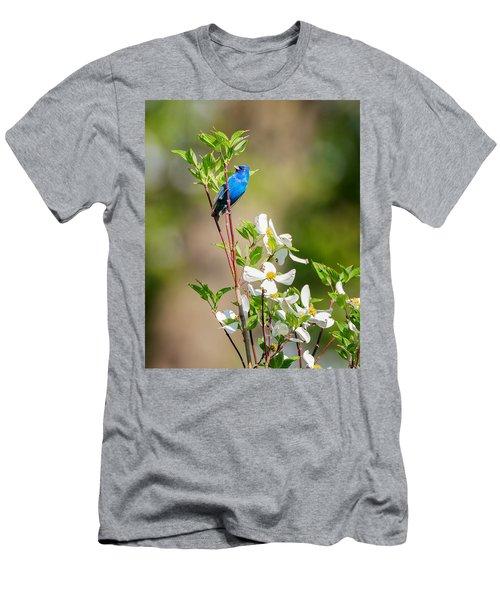 Indigo Bunting In Flowering Dogwood Men's T-Shirt (Slim Fit) by Bill Wakeley