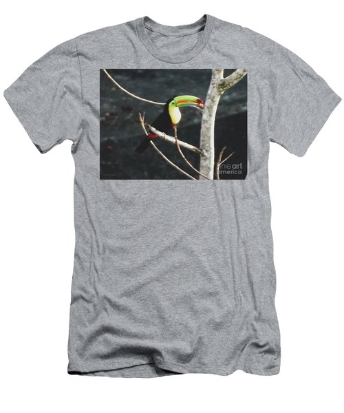 Keel-billed Toucan Men's T-Shirt (Athletic Fit)