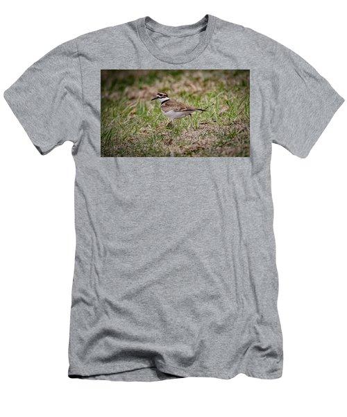 Killdeer Men's T-Shirt (Slim Fit) by Ray Congrove
