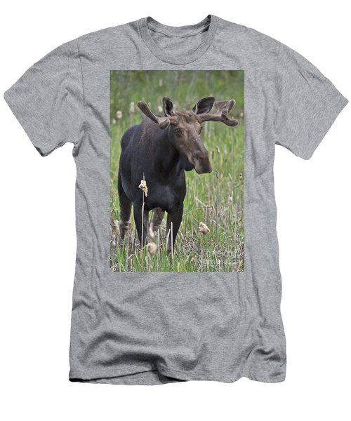 King Of The Forest.. Men's T-Shirt (Athletic Fit)