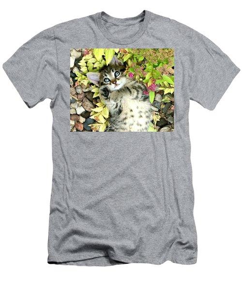 Kitten Dreams Men's T-Shirt (Athletic Fit)
