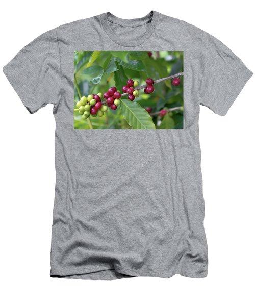 Kona Coffee Cherries Men's T-Shirt (Athletic Fit)