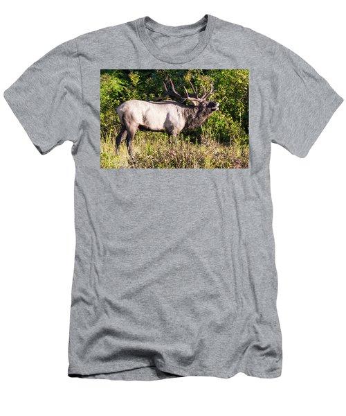 Large Bull Elk Bugling Men's T-Shirt (Athletic Fit)