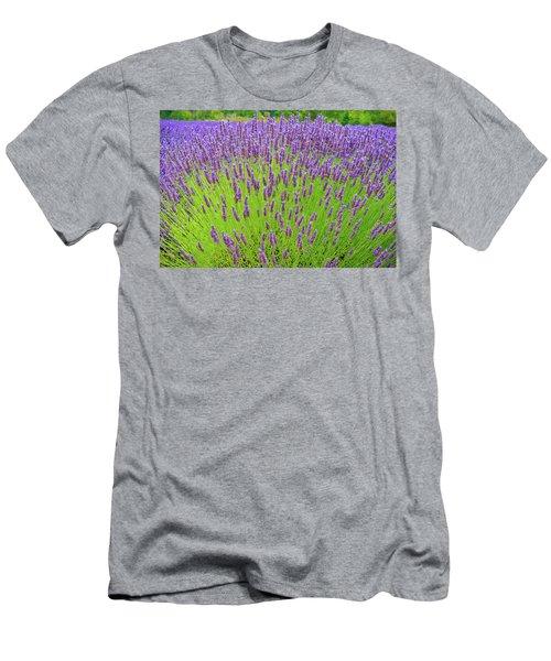 Lavender Gathering Men's T-Shirt (Slim Fit) by Ken Stanback