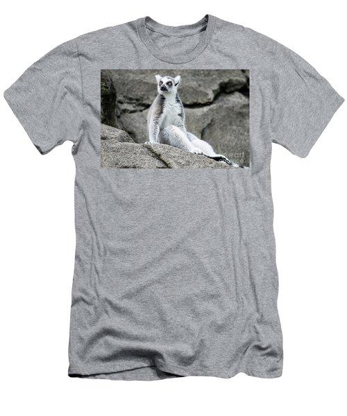 Lemur The Cutie Men's T-Shirt (Athletic Fit)