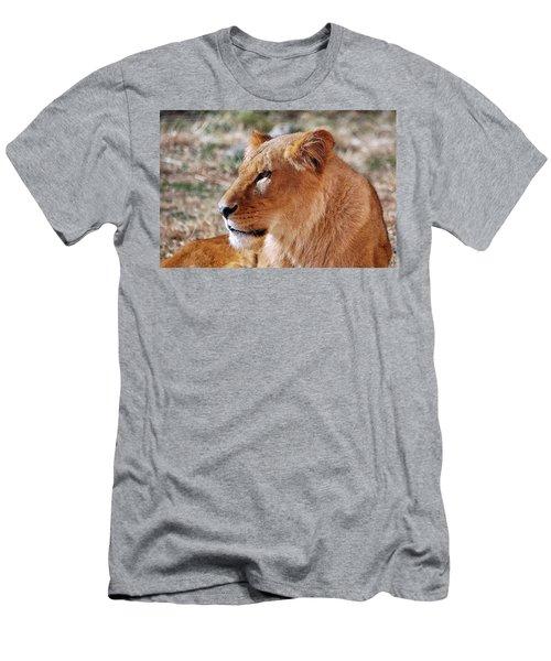 Lion Around Men's T-Shirt (Athletic Fit)