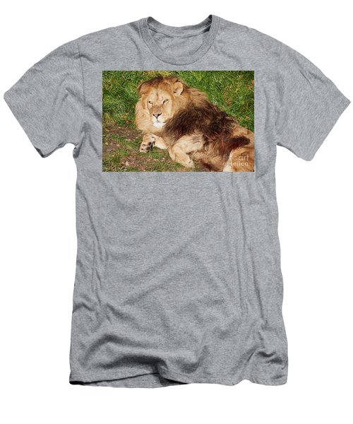 Men's T-Shirt (Athletic Fit) featuring the photograph Lion Resting In The Sun by Nick Biemans