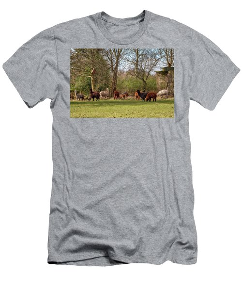Men's T-Shirt (Athletic Fit) featuring the photograph Alpacas In Scotland by Jeremy Lavender Photography