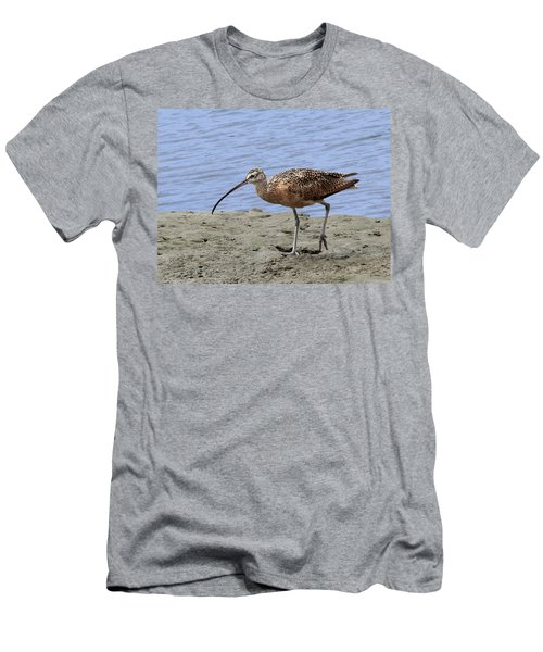 Long-billed Curlew Men's T-Shirt (Athletic Fit)