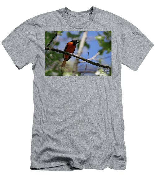 Male Baltimore Oriole Men's T-Shirt (Athletic Fit)