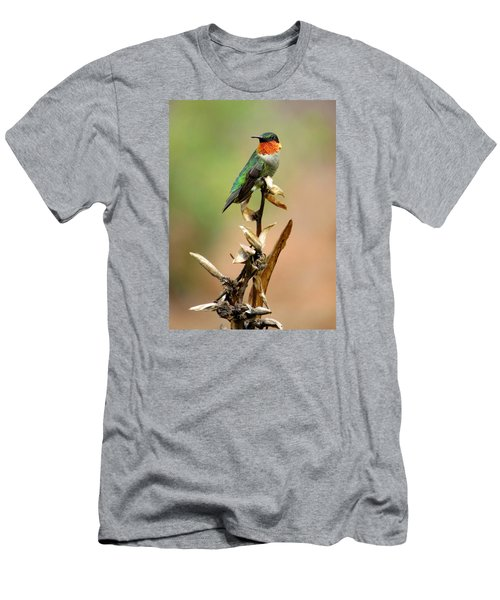 Male Ruby Throat Hummingbird Men's T-Shirt (Slim Fit) by Phyllis Beiser