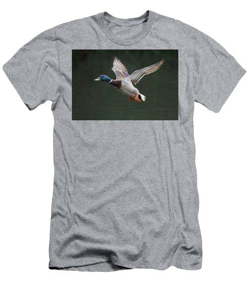Mallard Drake In Flight Men's T-Shirt (Athletic Fit)