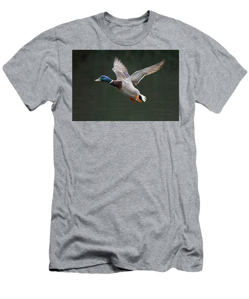 Mallard Drake In Flight Men's T-Shirt (Athletic Fit)