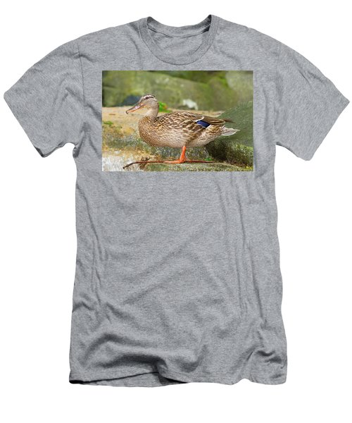 Mallard Duck Men's T-Shirt (Athletic Fit)