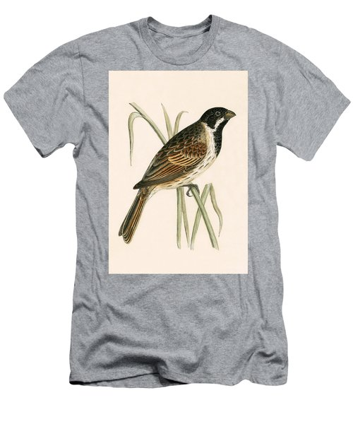 Marsh Bunting Men's T-Shirt (Athletic Fit)
