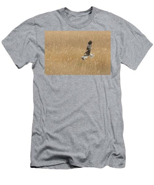 Marsh Harrier Men's T-Shirt (Athletic Fit)