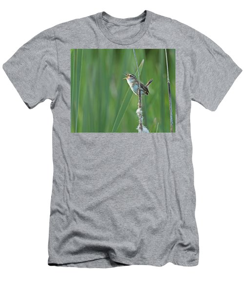 Marsh Wren Men's T-Shirt (Athletic Fit)