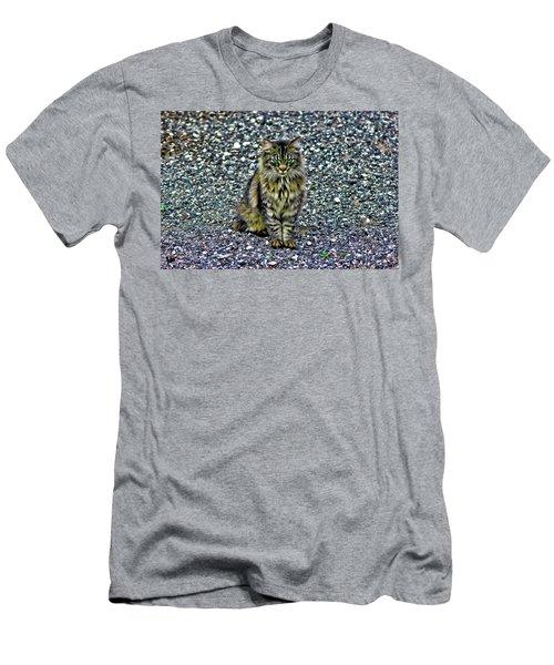 Mattie The Main Coon Cat Men's T-Shirt (Athletic Fit)