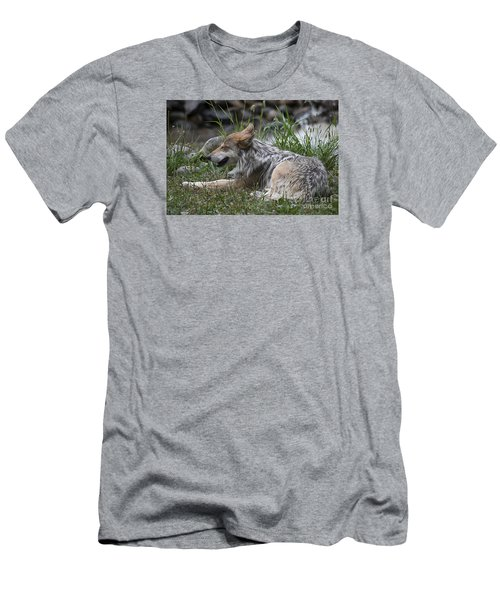 Men's T-Shirt (Slim Fit) featuring the photograph Mexican Wolf 20120714_112a by Tina Hopkins
