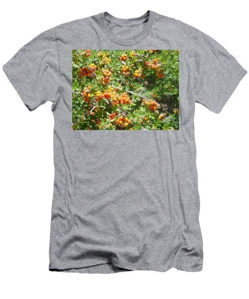 Miniature Fruit Balls Men's T-Shirt (Athletic Fit)
