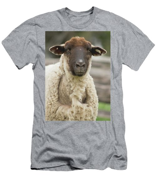 Moma Sheep Men's T-Shirt (Athletic Fit)