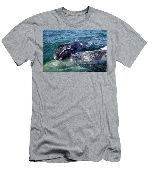 Mother Grey Whale And Baby Calf Men's T-Shirt (Athletic Fit)