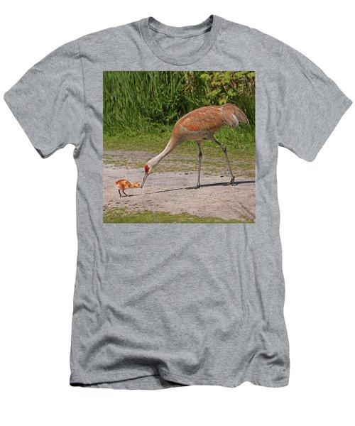 Mother Sandhill Crane Feeding Baby Men's T-Shirt (Athletic Fit)