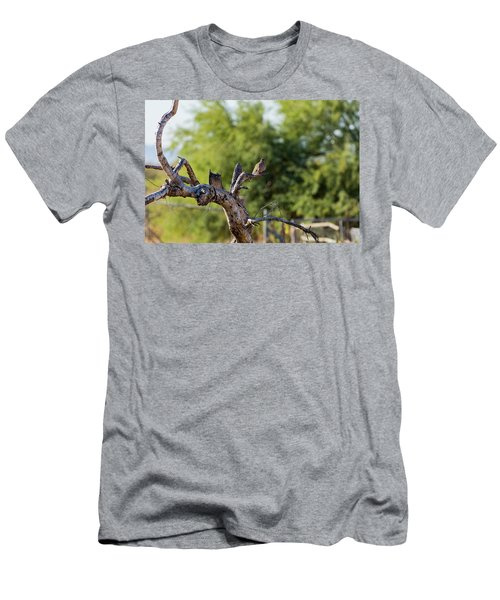 Mourning Dove In Old Tree Men's T-Shirt (Athletic Fit)